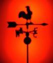世界指南0026,世界指南,科技,体育项目 影像 公鸡