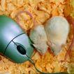 鼠标0040,鼠标,科技,可爱 白鼠 木屑