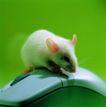 鼠标0043,鼠标,科技,鼠标 老鼠 按钮