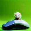 鼠标0050,鼠标,科技,白鼠 趴伏 鼠标
