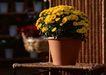 花草分类0233,花草分类,园林,花盆 鲜花 阳光 立体 桌子