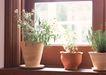 花草分类0234,花草分类,园林,窗台 盆栽 花草