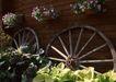 花草分类0235,花草分类,园林,花篮 花盆 车轮