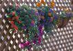 花草分类0236,花草分类,园林,花圃 花盆 鲜花