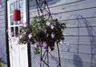 花草分类0237,花草分类,园林,室外 房门 花篮