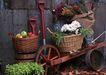 花草分类0239,花草分类,园林,独轮车 果篮 水果 鲜花 盆栽