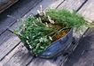 花草分类0240,花草分类,园林,