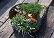 花草分类0241,花草分类,园林,无名 野花 小草