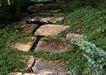 花草分类0247,花草分类,园林,野外 林中 灌木丛