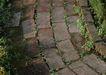 花草分类0248,花草分类,园林,砖块 小路 林荫道