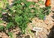 花草分类0253,花草分类,园林,