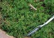 花草分类0255,花草分类,园林,
