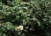 花草分类0256,花草分类,园林,