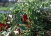花草分类0258,花草分类,园林,