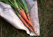 花草分类0259,花草分类,园林,