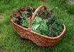 花草分类0261,花草分类,园林,草地 篮子 花草