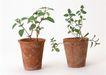 花草分类0265,花草分类,园林,绿色植物 花盆 成长