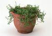 花草分类0267,花草分类,园林,花盆 绿色植物 蔓延