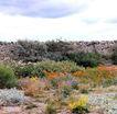 花草分类0273,花草分类,园林,野花 河提边的花草 野生杂花
