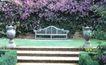花草分类0275,花草分类,园林,樱花 休息倚 台阶