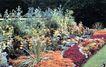 花草分类0276,花草分类,园林,多色混和 高杆儿花 绿化带
