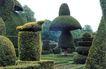 花草分类0277,花草分类,园林,蘑菇树 小鸟形剪树 绿化