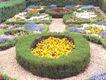 花草分类0280,花草分类,园林,五彩缤纷 花草 圆形