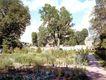 花草分类0281,花草分类,园林,蓝天 绿树 楼房