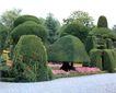 花草分类0286,花草分类,园林,形状各异的树 粉红的花朵 石子路