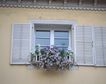 外窗绿化0058,外窗绿化,园林,淡紫 花朵 延外