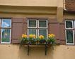 外窗绿化0059,外窗绿化,园林,黄色 外墙 花盆
