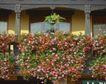 外窗绿化0071,外窗绿化,园林,满墙 花卉 盛开