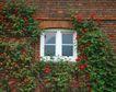 外窗绿化0074,外窗绿化,园林,围绕 方形 小窗