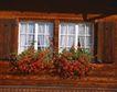 外窗绿化0080,外窗绿化,园林,鲜艳 花簇 窗下