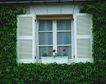 外窗绿化0083,外窗绿化,园林,窗台 绿化 环境保护