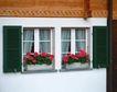 外窗绿化0090,外窗绿化,园林,窗子 盆景 雕花