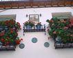 外窗绿化0091,外窗绿化,园林,阳台 盆景 装饰