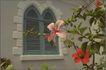 外窗绿化0101,外窗绿化,园林,林园 花朵 公园