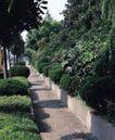 园林绿化0121,园林绿化,园林,林荫 小道 人行道 行人 路过