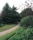 园林绿化0122,园林绿化,园林,松树 幽静 约会 阴天 休憩