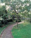 园林绿化0124,园林绿化,园林,枝繁叶茂 水泥路 环境 空气 休息