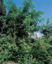 园林绿化0125,园林绿化,园林,烈日 草木 葱郁 竹叶 房子前