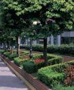 园林绿化0128,园林绿化,园林,绿化带 园林 园林艺术 爱护环境 责任
