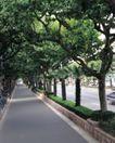 园林绿化0133,园林绿化,园林,街道一侧 梧桐树 单车 自行车 停放