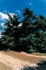园林绿化0136,园林绿化,园林,大树