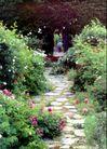 园林绿化0156,园林绿化,园林,开花 鲜花 小路