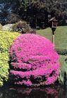 园林绿化0171,园林绿化,园林,公园一角 花团锦簇 复古路灯