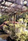 园林绿化0174,园林绿化,园林,花架 低垂 春光