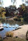 园林绿化0175,园林绿化,园林,公园角落 水池 石质踏板