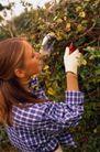 园林种植0123,园林种植,园林,修剪树枝 白手套 黄头发 格子衣 认真